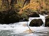 渓流に浮かぶ細枝
